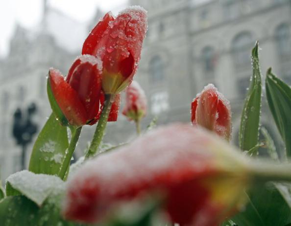 春「April Snow Foils Springtime In Midwest」:写真・画像(5)[壁紙.com]