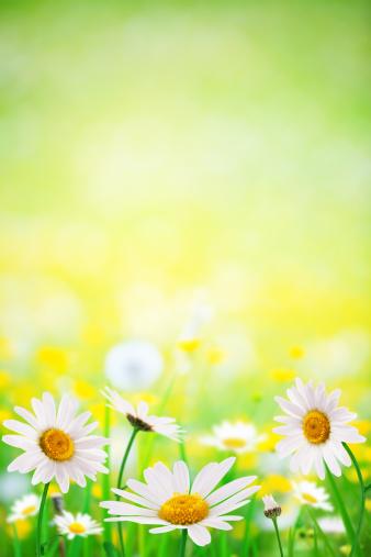 花畑「春の花」:スマホ壁紙(0)
