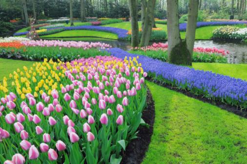 Keukenhof Gardens「Spring Flowers in Formal Garden.」:スマホ壁紙(10)