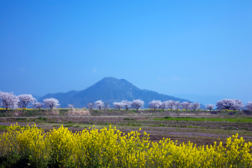 Spring Collection「Spring Flower Field and Mountain in the Background」:スマホ壁紙(6)