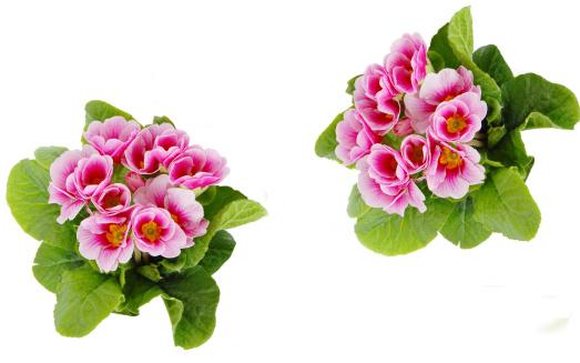 ミニチュア「spring Flowers」:スマホ壁紙(6)