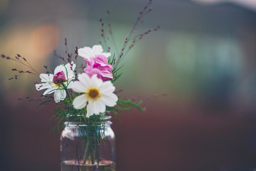 Cosmos Flower「Flower Immersion. Simple bouquet of cosmos flowers in glass jar」:スマホ壁紙(6)