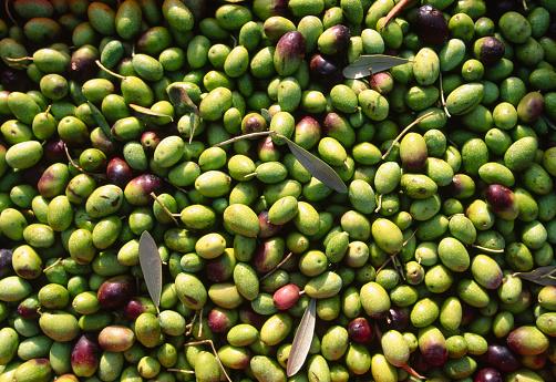 1990-1999「Olive Harvest」:スマホ壁紙(3)