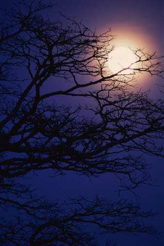 月「Acacia Tree and a Full Moon, Tanzania」:スマホ壁紙(16)