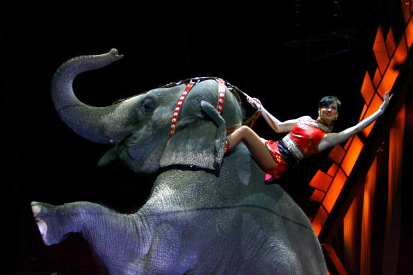 Animal「Ringling Bros. And Barnum & Bailey Presents Bellobration」:写真・画像(2)[壁紙.com]