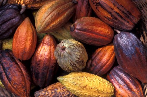 Harvesting「Cacao」:スマホ壁紙(10)