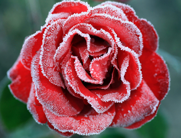 flower「Early Morning Frost In Knutsford As Temperatures Fall Around The UK」:写真・画像(18)[壁紙.com]