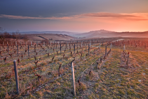 UNESCO「As the sun begins to peak over the surrounding hills at Sancerre, the vineyards are lit up provided a painterly view of the landscape. It is a no wonder UNESCO protected this area known as the Loire Valley.」:スマホ壁紙(9)