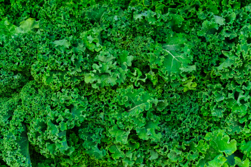 Mid-Atlantic - USA「USA, New York City, Fresh kale」:スマホ壁紙(5)