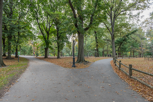 Footpath「USA, New York City, Manhattan, Central Park」:スマホ壁紙(14)