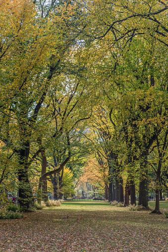 Treelined「USA, New York City, Manhattan, Central Park」:スマホ壁紙(0)