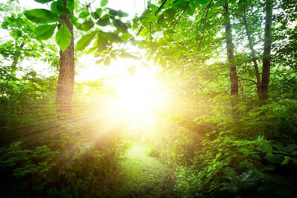USA, New York City, Green forest at sunrise:スマホ壁紙(壁紙.com)