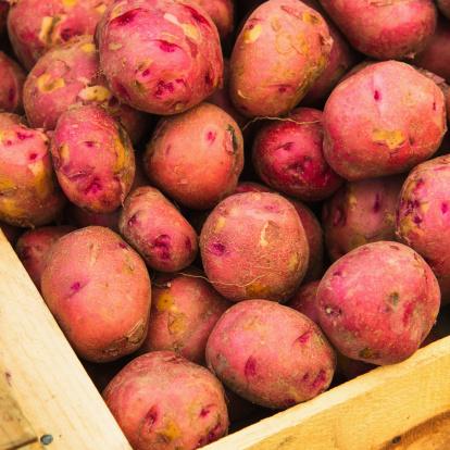 Red Potato「USA, New York City, Fresh red potatoes」:スマホ壁紙(10)