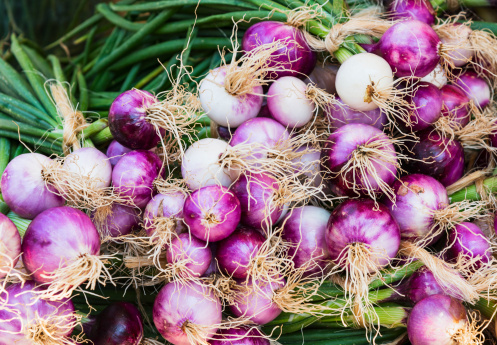 Spanish Onion「USA, New York City, Close-up shot of red onions」:スマホ壁紙(7)
