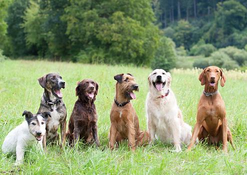 Purebred Dog「Dog School」:スマホ壁紙(15)