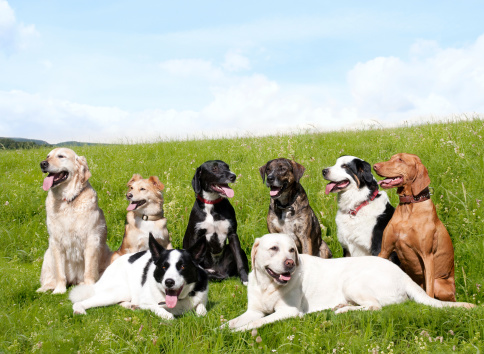 遊び心「犬の学校」:スマホ壁紙(19)