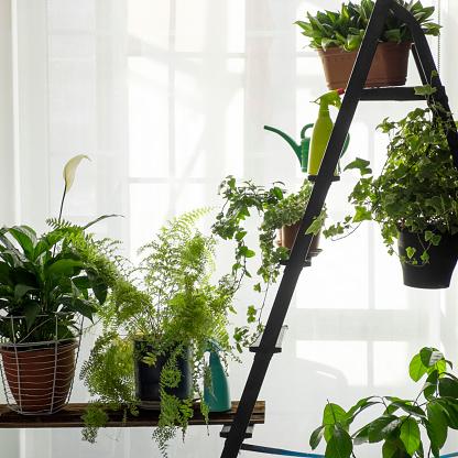 Fern「Green potted plants near window curtain」:スマホ壁紙(8)