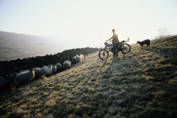 One Woman Only「Dog And Bike」:写真・画像(15)[壁紙.com]
