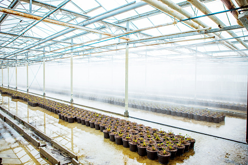 Real Life「The inside of a working Camellia greenhouse in the Netherlands」:スマホ壁紙(17)