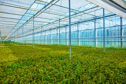 Real Life「The inside of a working Camellia greenhouse in the Netherlands」:スマホ壁紙(18)