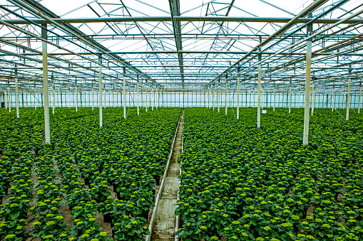 Real Life「The inside of a working Camellia greenhouse in the Netherlands」:スマホ壁紙(16)