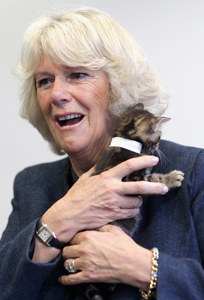 子猫「Duchess Of Cornwall Opens New Cattery At Battersea Dogs Home」:写真・画像(9)[壁紙.com]