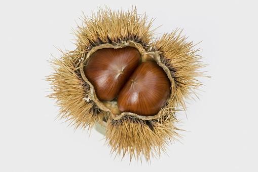 栗「Chestnut, white background」:スマホ壁紙(13)