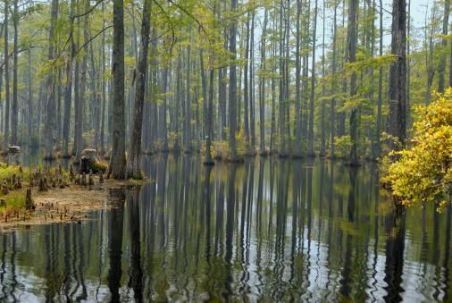 Charleston - South Carolina「Cypress swamp」:スマホ壁紙(5)