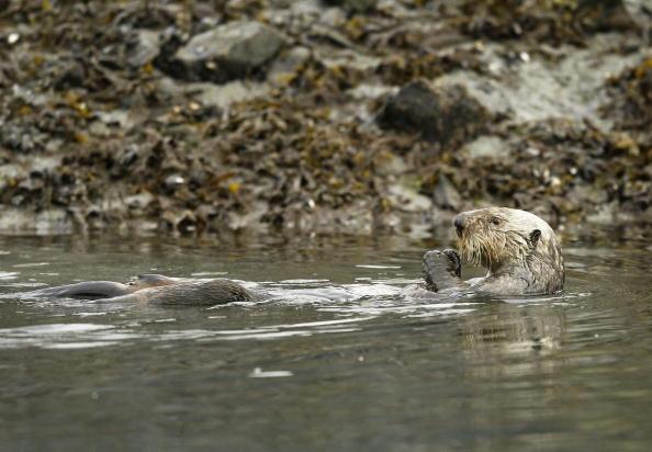 animal「Exxon Valdez Oil Disaster 15 Years Later」:写真・画像(2)[壁紙.com]
