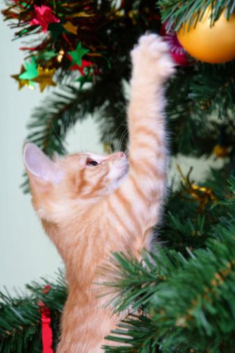 Kitten「キトンとクリスマスツリー」:スマホ壁紙(16)