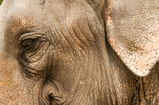 Eyesight「Elephant eye detail」:スマホ壁紙(2)
