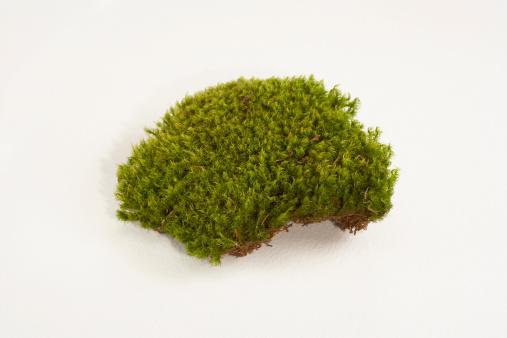 Moss「Mood Moss」:スマホ壁紙(13)
