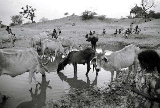 Rajasthan「A Three Year Old Drought In India」:写真・画像(7)[壁紙.com]