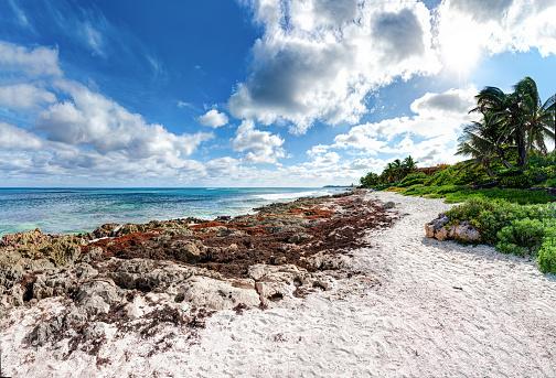 Mayan Riviera「Akumal Bay - Caribbean Sea, Mexico」:スマホ壁紙(17)