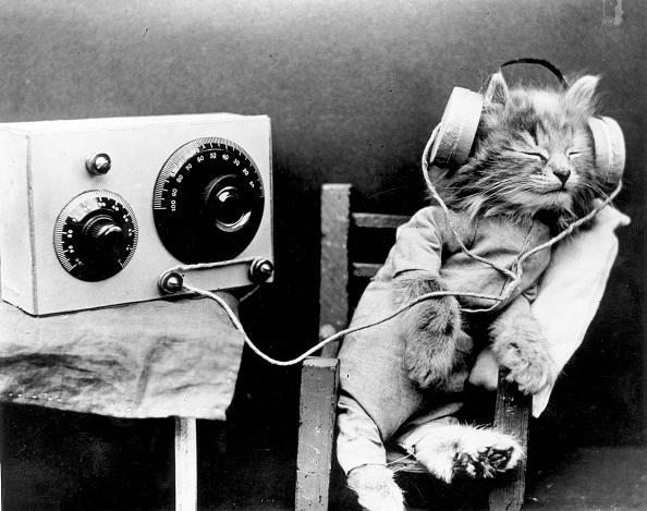 Audio Equipment「Radio Cat」:写真・画像(4)[壁紙.com]