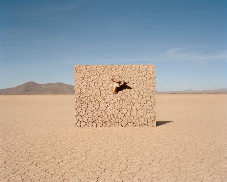 質感「Deer head on cracked mud wall in desert」:スマホ壁紙(12)