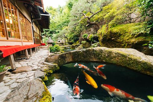 観賞用庭園「Japanese Koi Pond and Garden Outside Kyoto Japan Kissaten Restaurant」:スマホ壁紙(9)