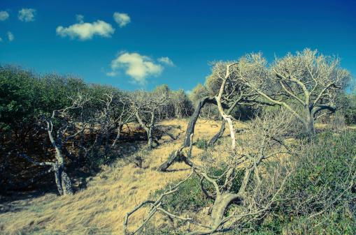 Fallen Tree「arid land and trees」:スマホ壁紙(14)