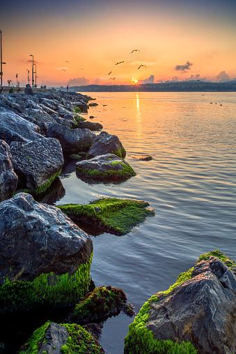 Turkey - Bird「Cankurtaran Shores with Big Stones」:スマホ壁紙(19)