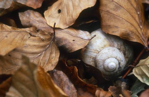 snails「schneckenhaus im Laub」:スマホ壁紙(19)