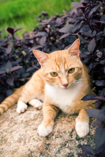 Mixed-Breed Cat「Cute cat enjoying his life」:スマホ壁紙(3)