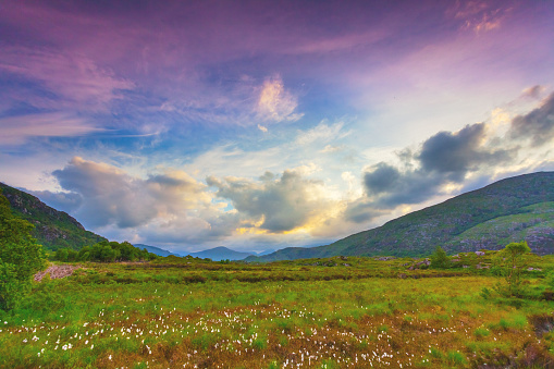 National Park「Landscape with cottongrass field along the Ring of Kerry, Ireland」:スマホ壁紙(19)