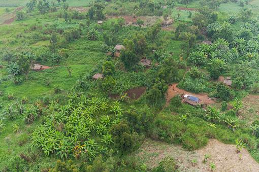 コンゴ民主共和国「Landscape with tropical trees, Democratic Republic of the Congo」:スマホ壁紙(17)