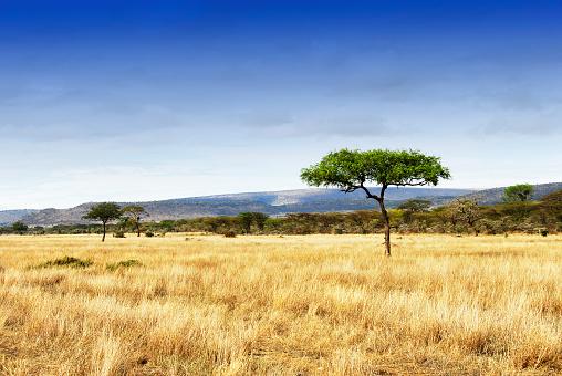 Volcano「Landscape with acacia trees in the Ngorongoro Crater, Tanzania」:スマホ壁紙(6)