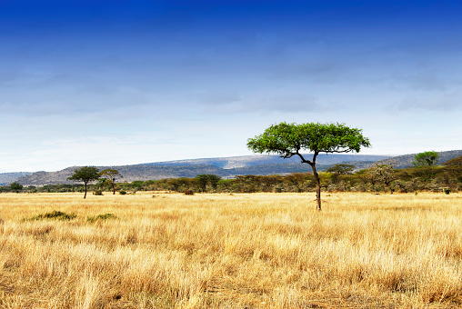 Volcanic Landscape「Landscape with acacia trees in the Ngorongoro Crater, Tanzania」:スマホ壁紙(15)