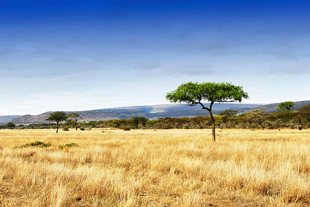 Landscape with acacia trees in the Ngorongoro Crater, Tanzania:スマホ壁紙(壁紙.com)
