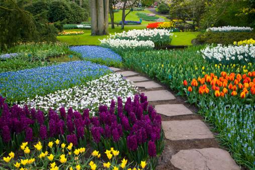 Keukenhof Gardens「Landscape with tulips Keukenhof Gardens Holland」:スマホ壁紙(7)
