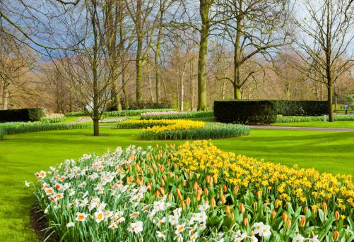 キューケンホフ公園「景観、オランダチューリップキューケンホフ公園」:スマホ壁紙(11)