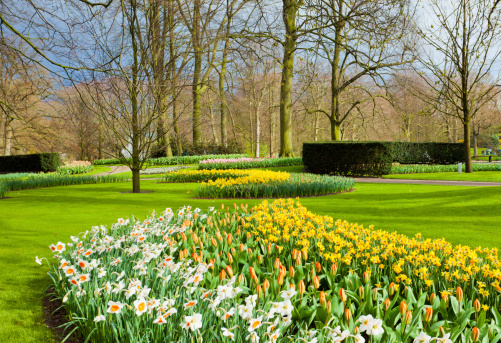 Keukenhof Gardens「Landscape with tulips Keukenhof Gardens Holland」:スマホ壁紙(19)
