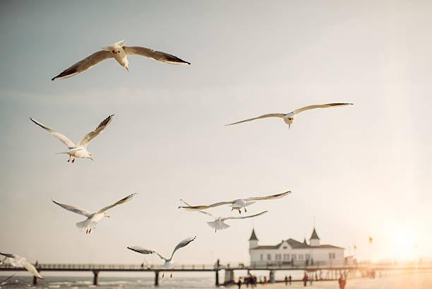 Flying Seagulls:スマホ壁紙(壁紙.com)